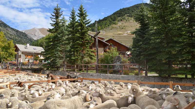 Camping Alpes Dauphiné Frankrijk # Alpe Wasbak_234112